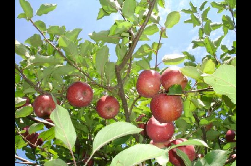Ellijay, home of the Apple Festival and many orchards
